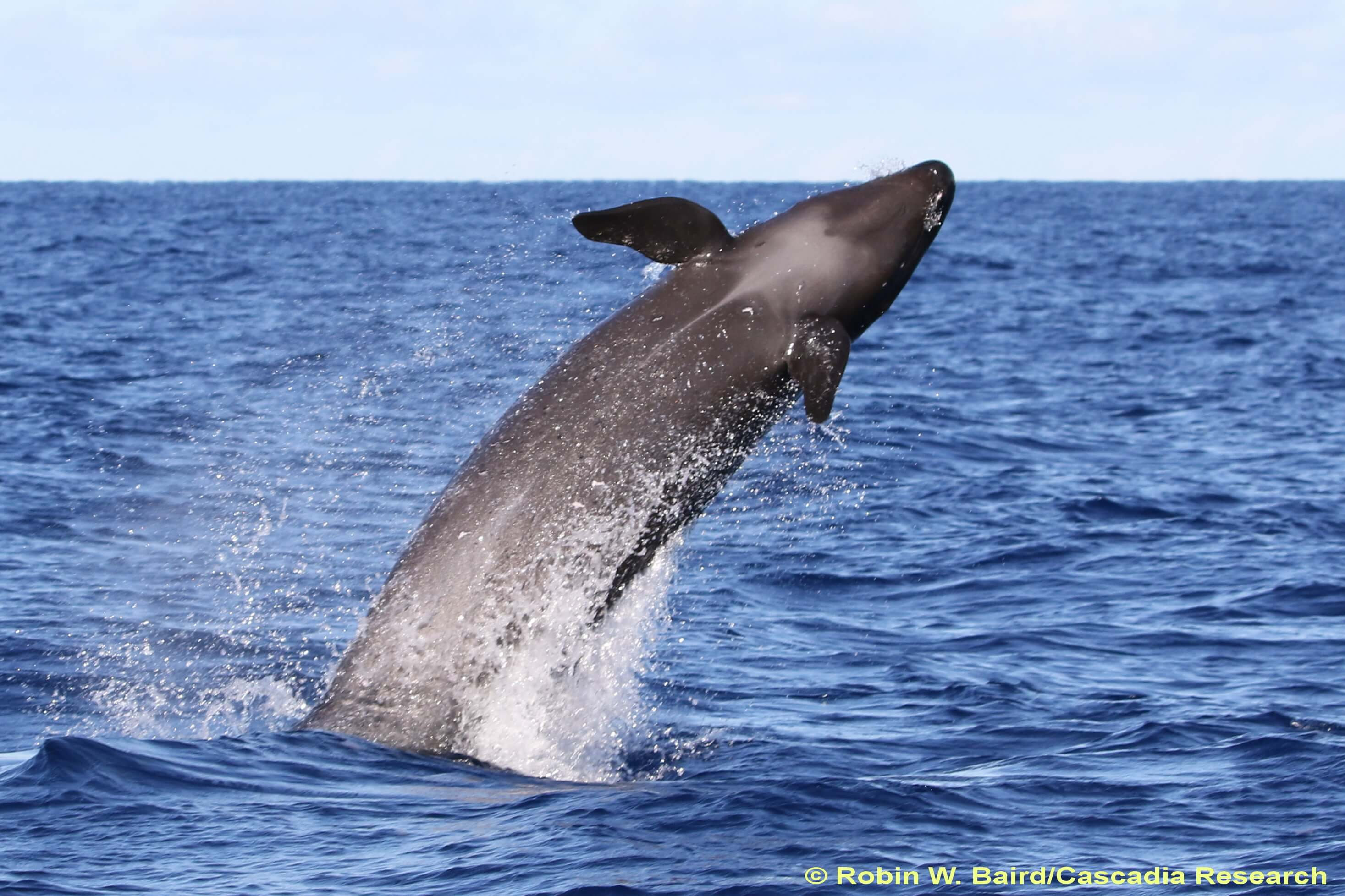 2019 Annual Meeting - Marine Mammal Commission