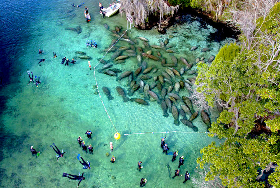 Humans and manatees in close proximity image