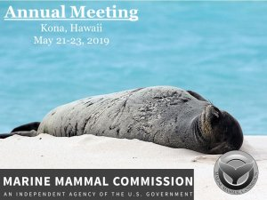 Hawaiian Monk Seals - a focal topic of our Annual Meeting