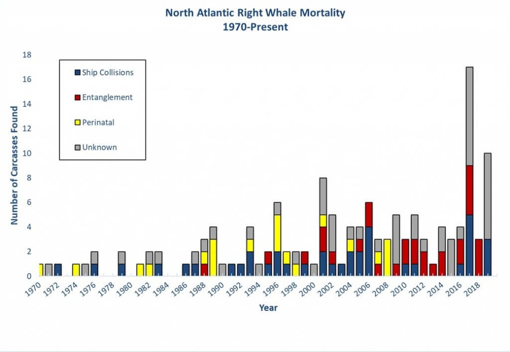 North Atlantic Right Whale Mortalities since 1970