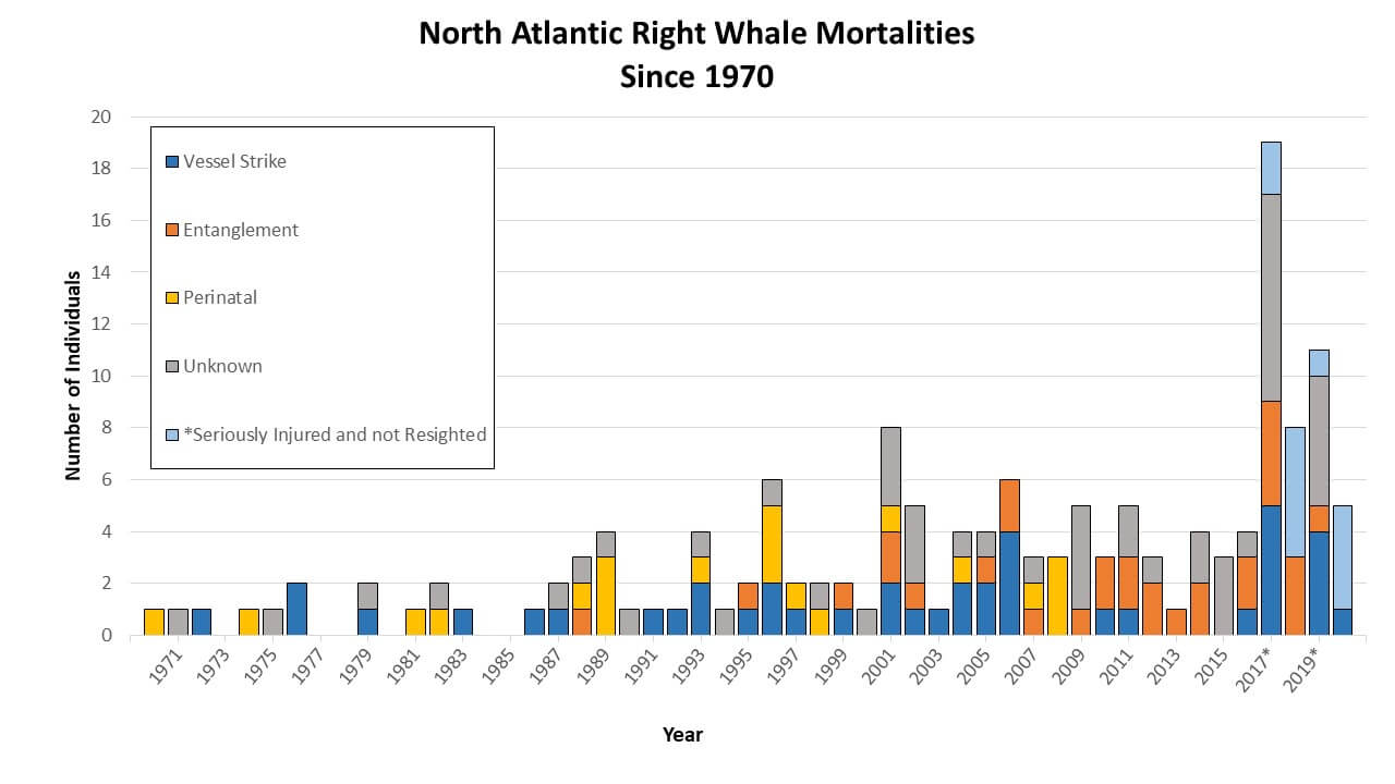 Right Whale Mortality Since 1970