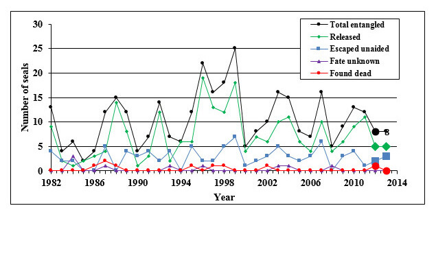 Number of Hawaiian monk seals observed entangled from 1982 through 2013. (NOAA's Pacific Islands Fisheries Science Center)